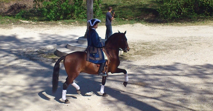 VIP, PSL Lusitano stallion with Charlotte Wittbom at Quinta do Brejo