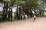 Classical riding tuition with Lusitano horses in Portugal.