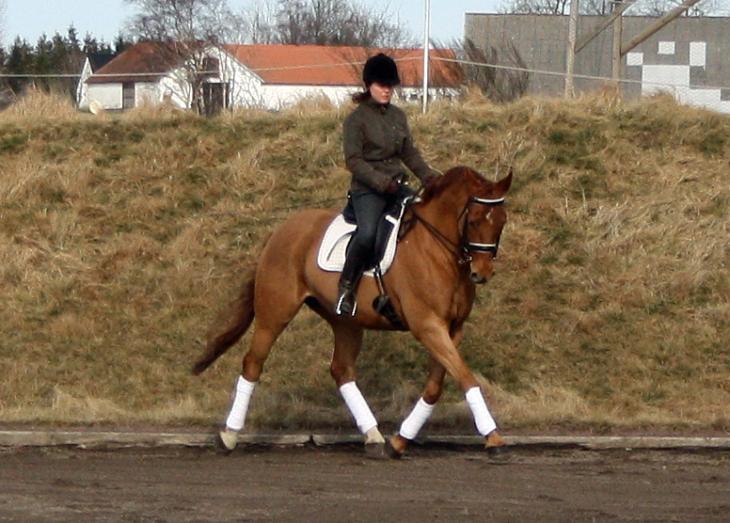 Charlotte Wittbom riding Swedish Warmblood, Ture