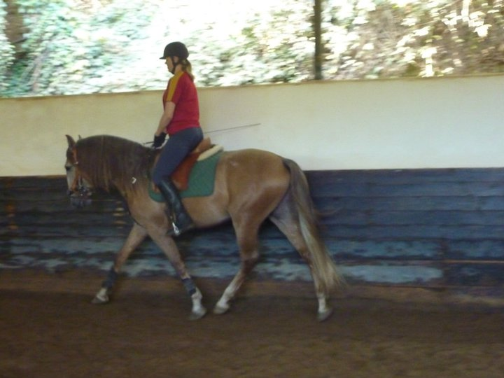 Cheque, PSL Lusitano and her owner, Summer 2011