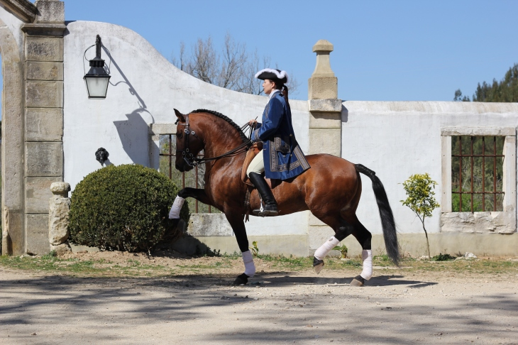 Charlotte Wittbom riding Lusitano, 'Vip' at Quinta do Brejo - www.charlottewittbom.com