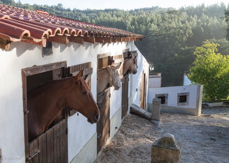 Quinta do Brejo - www.charlottewittbom.com